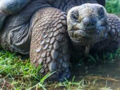 reduce site slowness and no longer be like the turtle